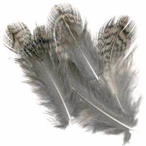 English Partridge Brown Back Hackles