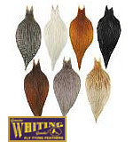Whiting Whole Cock Necks (Bronze Grade)