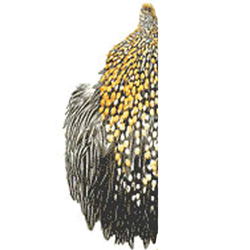 Jungle Cock Capes - British Domestic - Half Cape Grade B