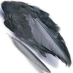 Coot Wings