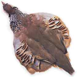 French Partridge Complete Skin