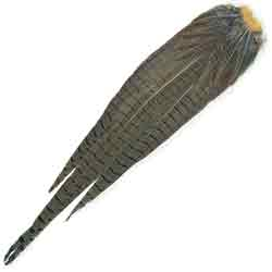 Cock Pheasant Complete Tail - Natural