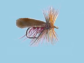 Turrall Caddis /Sedge - Murrough - Ca19