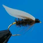 Coachman Wet Trout Fishing Fly #12 (W66)