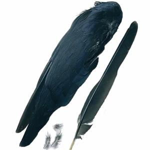 Crow Wings