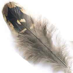 Hen Pheasant Shoulder Feathers