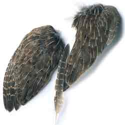 English Partridge Whole Wings