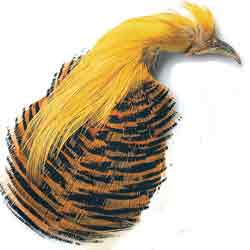 Golden Pheasant Complete Head No. 2