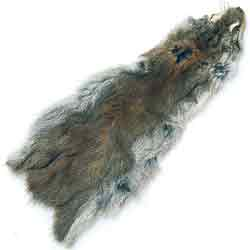 Pine Squirrel Whole Skin