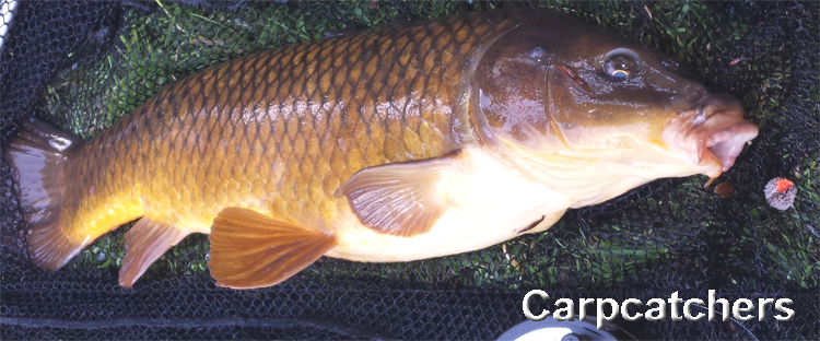 Carp Fly Fishing
