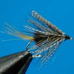 Grey Ghost Wet Irish Bumble Trout Fishing Fly #12 (W313)